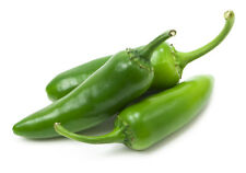 CHILI PEPPER HOT Jalapeno Green Early - ORGANIC/BIO -  100 Seeds