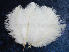 """16 Grade A 12-14"""" Snow White Ostrich Drab Plume Feathers Wedding, Millinery, NEW"""