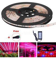 1M Plant Growing 5050 Strip Light Hydroponic RED BLUE 5:1 Waterproof 12V
