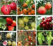Imported Bonsai Fruits Tree Seeds Combo -Grapes Guava Custard Apple Orange Lemon