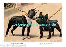 1919 ~French Bulldog and Boston Terrier Dog on leash~ New Large Note Cards