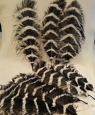 New* Fairy Black/White long Ostrich Feathers  Day party Decoration -9 left
