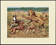 RHODESIAN RIDGEBACK DOGS AND LION GREAT DOG PRINT MOUNTED READY TO FRAME