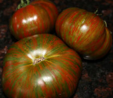 10 graines de Tomate CHOCOLATE STRIPES - Tomato seeds samen semillas potager