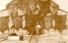 ANTIQUE HUNTING REPRODUCTION 8X10 PHOTOGRAPH 10 GRIZZLY BEAR HIDES ON BARN WALL