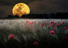 FULL MOON OVER POPPY FIELD * QUALITY CANVAS ART PRINT