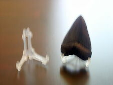 """1 Easel Type 2"""" Display Stand Megalodon Shark Tooth Teeth"""
