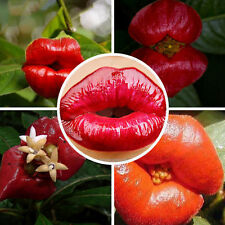 40pcs Amazing Red Lip Flower Seeds Garden Park Yard Plant Psychotria Elata Seeds