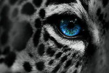 Framed Print - Vibrant Blue Eye Black & White Leopard (Picture Tiger Animal Art)