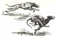 RACING GREYHOUND - 1964 Dog Art Print - MATTED