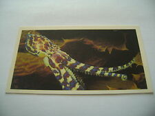 Grandee The Living Ocean Card No 10 Southern Blue-Ringed Octopus