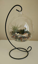 Hanging Glass Terrarium Vase with Air Plant, Gemstone Chips, Moss & Shell