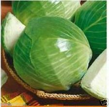 """Seeds of white cabbage """"Siberian 60"""" (30 seeds) Lot of 1 pcs"""