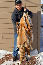 Tanned Red Fox pelt, fur soft tan, great value, TNRF-lg