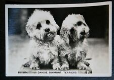 Dandie Dinmont Terrier   Original 1930's Vintage Photo Card    VGC