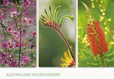 Ansichtskarte: Wildblumen aus Australien