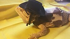 Lil' Bestie Bearded Dragon Harness and Leash COWBOY
