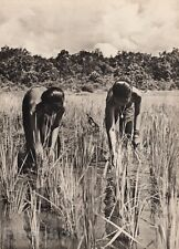 1940 Original BORNEO FEMALE NUDE Topless Women Rice Paddy Photo Art By K.F. WONG