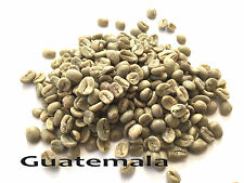 20 LBS Green Coffee - Guatemala SHB EP - specialty grade green beans