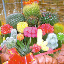 10 Bag 100 Seeds Mixture Of Cactus Flower Color Plant TB