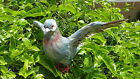 Feather Grey Gray Flying Realistic PIGEON Bird Taxidermy Barred Furry Animal