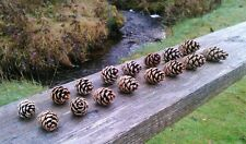 100 natural pine cones craft weddings Xmas wreaths florist 4 - 6 cms approx