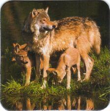 Refrigerador-Magnet:: loba con cachorros-wolve Family