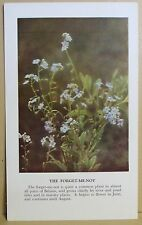 circa 50's / 60's Collectors Card - Cassell's Nature Cards Series A # 3