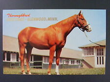 Glenwood Minnesota MN Greetings Thoroughbred Horse Vintage Postcard 1950s