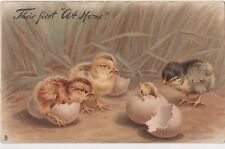 POSTCARD  ANIMALS  CHICKS  Their first at home   Tuck