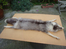 "Vintage Real Fox Fur Neck Wrap/Stole/Collar 47"" Long Glass Eyes"