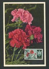 San MARINO MK 1955 Flora GAROFANO CARNATION Maximum cartolina MAXIMUM CARD MC cm d8018