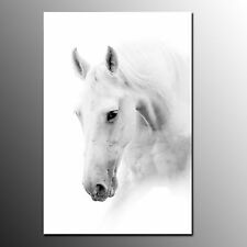 White Horse Canvas Printing For Living Room Wall Art Canvas Painting-No Frame