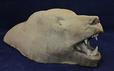 Large Papier Mache Bear Head - Taxidermy Item