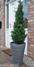Best Artificial 120cm 4ft Topiary Cedar Outdoor Tree alt Boxwood Spiral Ball Bay