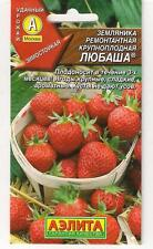 "Strawberries remontant large-fruited ""Lyubasha"" ® Russian High Quality seeds"