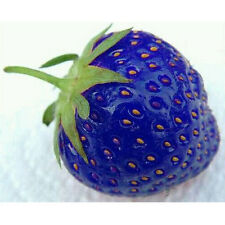 100PCS Natural Organic Sweet Blue Strawberry Seeds Vegetables Plant Seed New