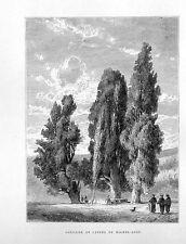 Stampa antica ROMA fontana e cipressi di Michelangelo 1877 Old print Rome