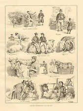Cattle Show, English, Cow, Sheep, Hogs, Humor w Text Vintage 1885 Antique Print.