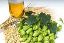 GERMAN MAGNUM HOP SEED * BULK 100 SEEDS  * HOPS * AROMA * CASH CROP*BEER *