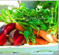 SEED TAPE - HAPPY POT MIX 350 seeds 5m/16ft of Carrot Beetroot Parsley 3 tapes