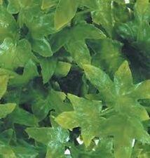1/35 Scale Jungle Plant #9