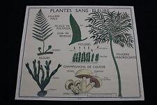 R209 Affiche scolaire papier Rossignol 11 PLANTES 12 CLASSIFICATION VEGETAUX