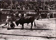 NÎMES arènes tauromachie corrida course de taureaux la mise à mort