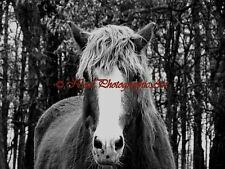 Rustic Black White Horse Equine Country Barn Art Matted Picture Brown Cream A806