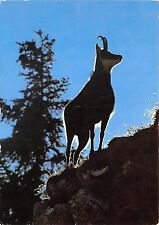 BF39216 chamois goat switzerland   animal animaux