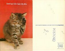 USA Greetings from Sauk City Wis. MAINE COON Cat Gatto Chat Katze 猫 (S-L XX234)