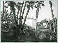 Algérie, cimetière arabe  vintage print.  Photomécanique  17x22  Circa 189