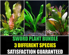 Sword Plants Bundle - 3 Species - Amazon, Red Flame, Kleiner Bar - Easy Aquarium