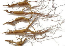 60g asian chinese quality 30 years wild ginseng insam ninjin root with tail box
